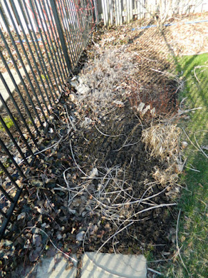 North York spring garden cleanup before by Paul Jung Gardening Services Toronto