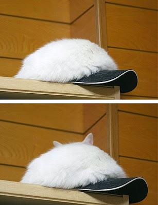 Gato camuflado con gorra