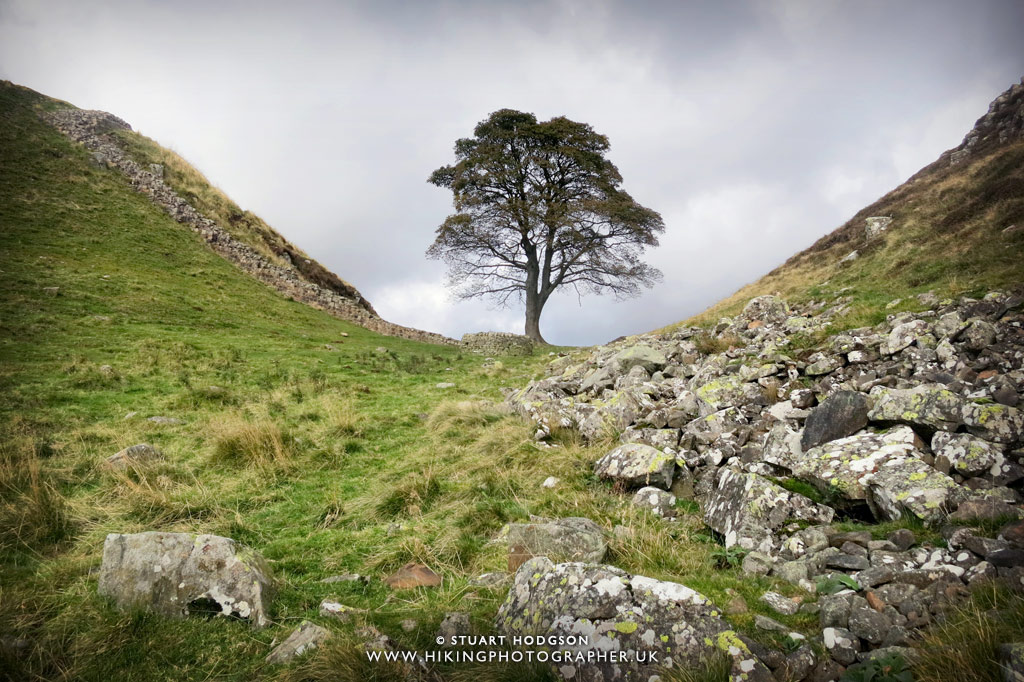 Best Hadrians Wall View, Sycamore Gap, Hadrian's Wall Walk, Robin Hood prince of thieves, best view,, Roman wall, where is it