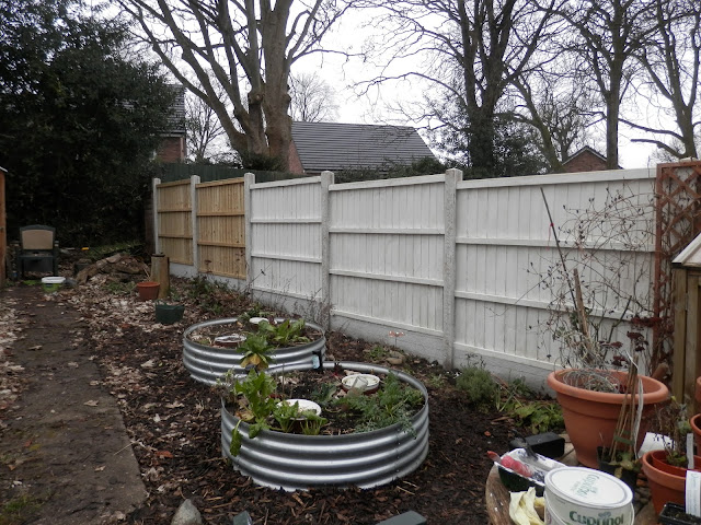 Diary of a suburban permaculture(ish) garden, February 2018.  From UK garden blogger secondhandsusie.blogspot.com #gardenblogger #permaculturegarden #suburbanpermaculture #urbanpermaculture #organicgarden #februarygardening #ukgarden