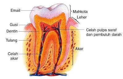 http://www.titik-pijat.com/2017/08/titik-pijat-refleksi-sakit-gigi-gusi.html