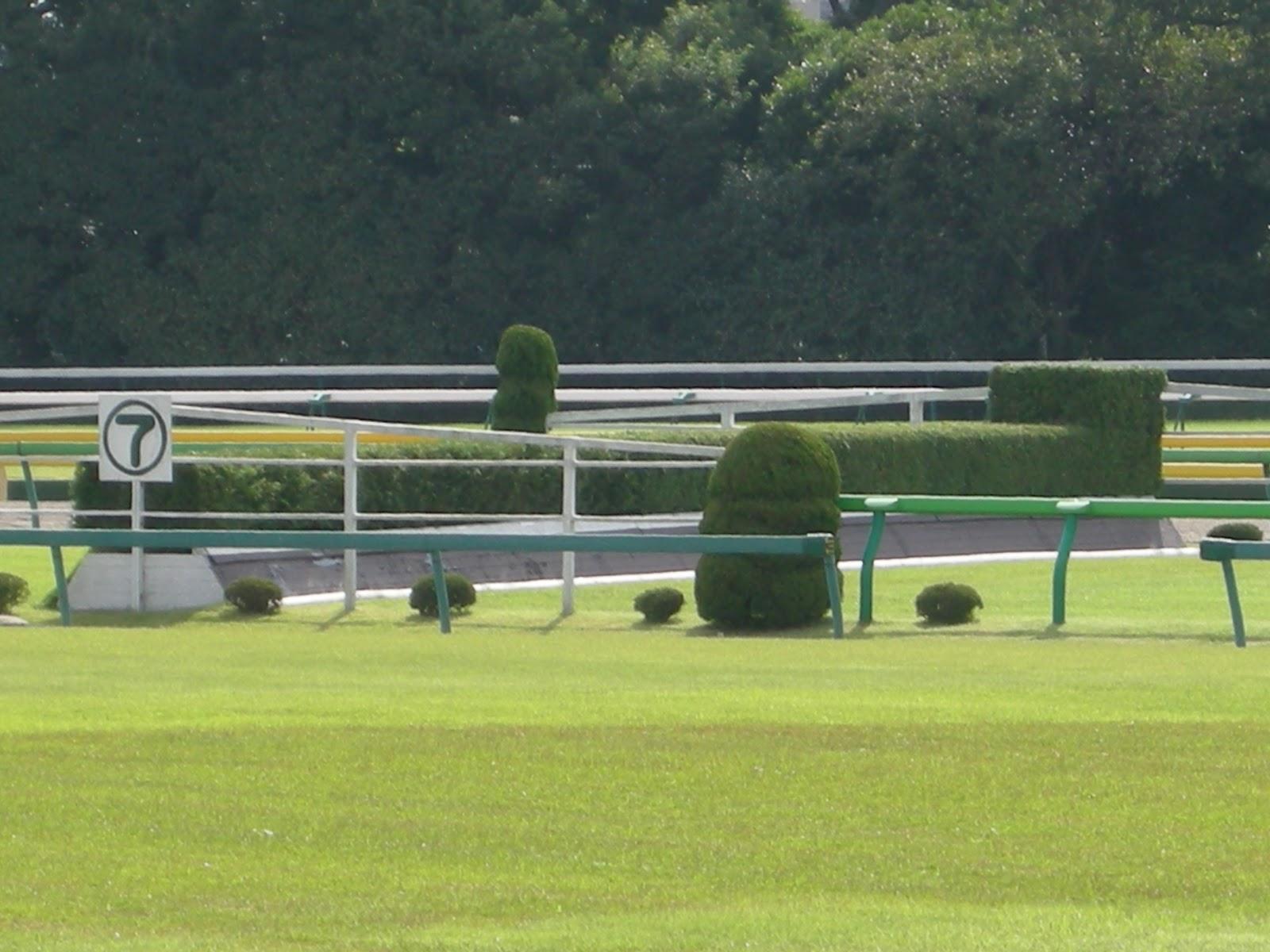 東京競馬場の芝生と柵と生け垣