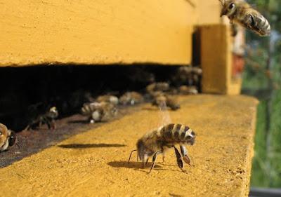 Στοιχεία για τις μέλισσες που θα σε αφήσουν κατάπληκτο