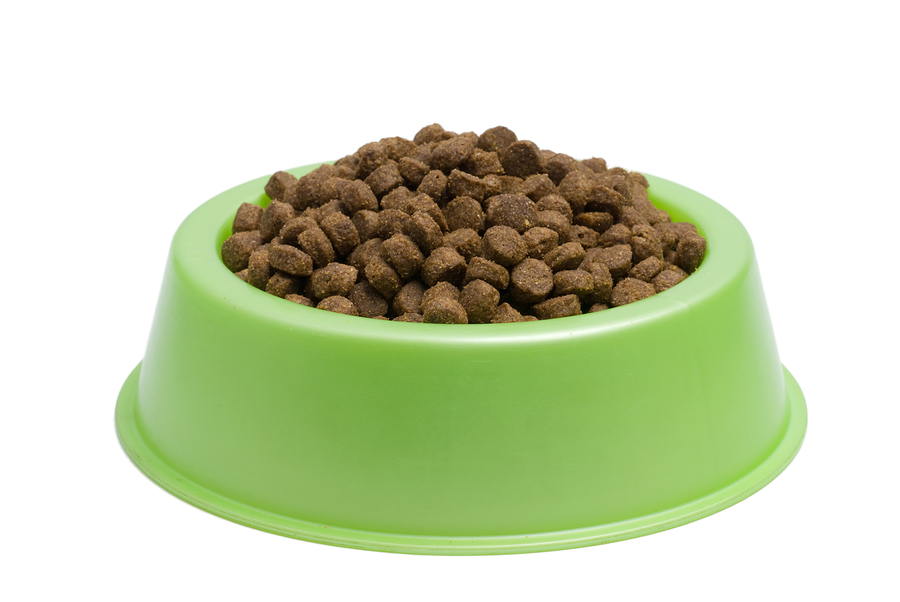 Now Dry Dog Food