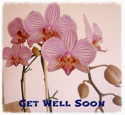 get well cards Phalaenopsis
