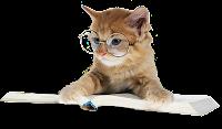 Gato de óculos lendo png