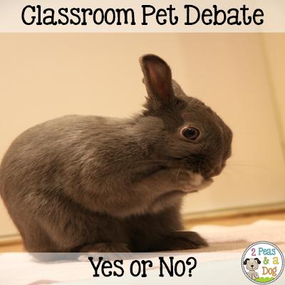 Why I say NO to classroom pets.