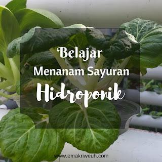 belajar menanam sayuran hidroponik