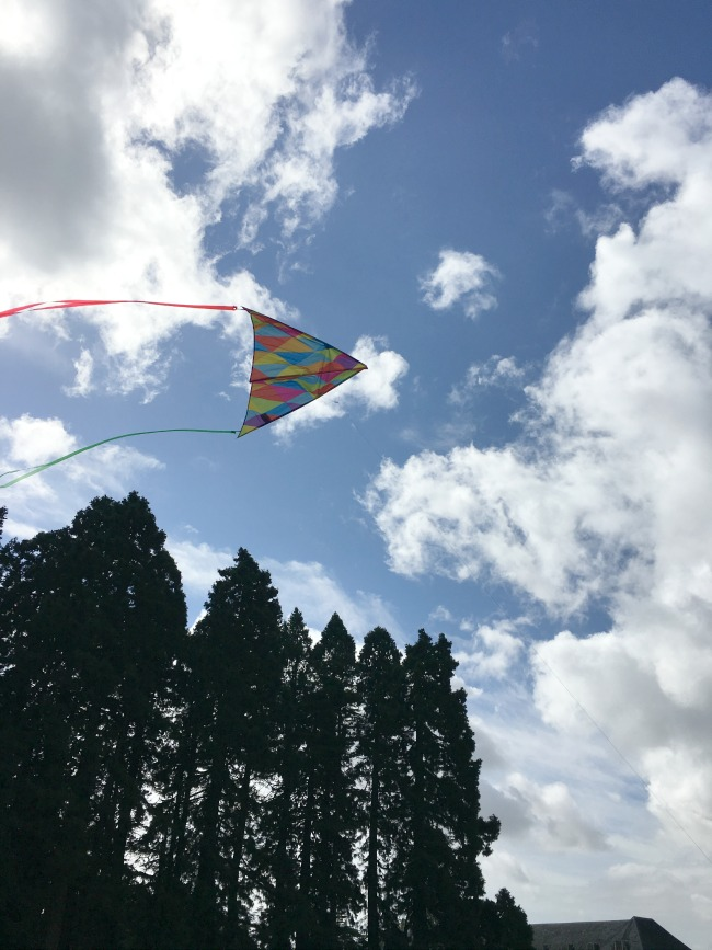 kite-in-sky-above-trees