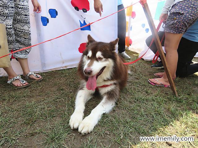 UPM  Dogathon 2018 husky