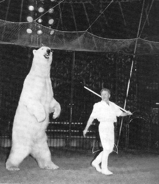 Tiede-Polarbearandtrainer.jpg