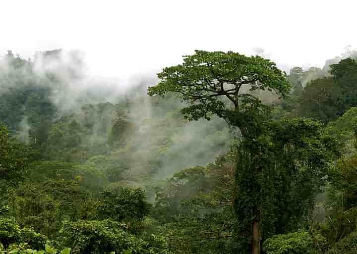 Wisata Alam Hutan Tropis