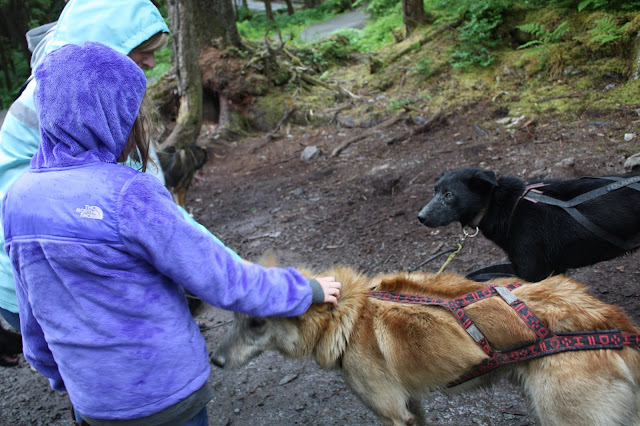 Meeting Alaskan huskies at the musher's camp in Juneau, Alaska.