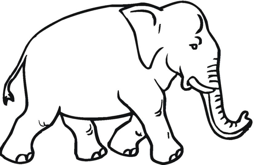 Gambar Download Gambar Sketsa Hitam Putih Mewarnai Gajah
