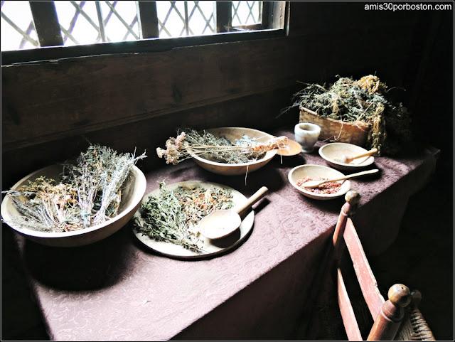 Plantas Aromáticas y Especias de la Pioneer Village