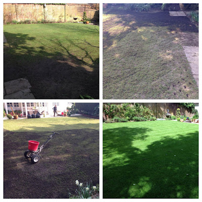 A rescued lawn in Dorking, Surrey