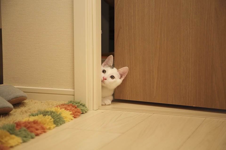 cat-peeking-behind-door.jpeg