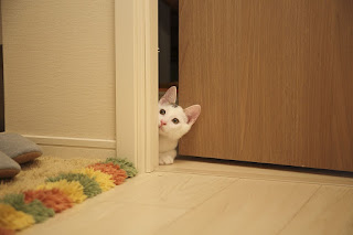 cat-peeking-behind-door.jpeg
