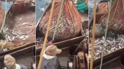 Rede de pesca cheia de peixes