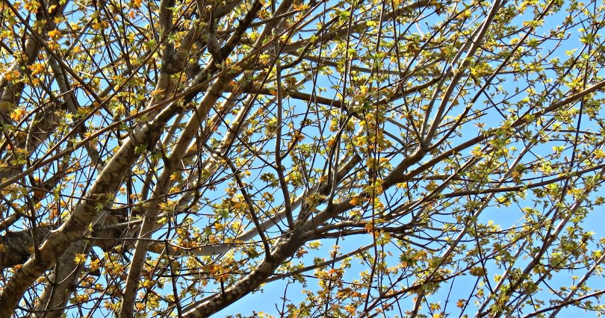 My Stitchin-n-Stuff: Spring