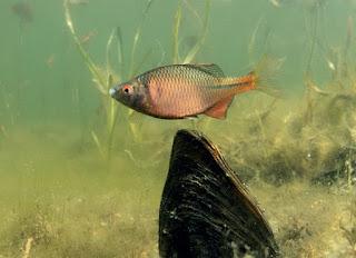Foto cover Sturende factoren voor vissen in het beheersgebied van Waterschap Rijn en IJssel
