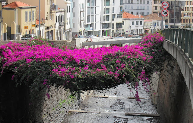 a picture that will become very rare in Funchal