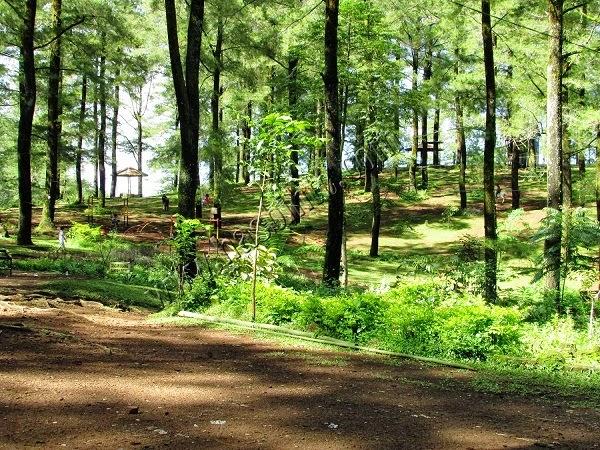 Kawasan hutan pinus malino