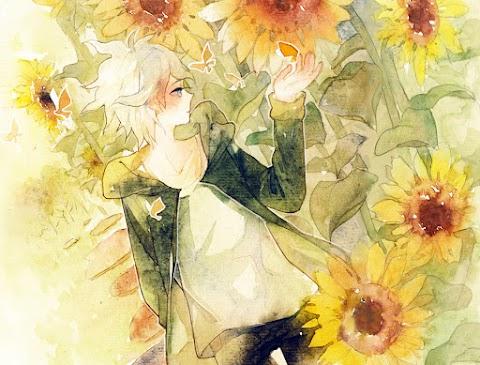 Truyện audio: Chàng trai trong hoa hướng dương (Hoàn)