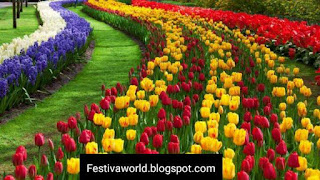Tulip Festival, Srinagar