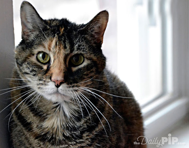 Many senior cats are surrendered to shelters after their owner does.