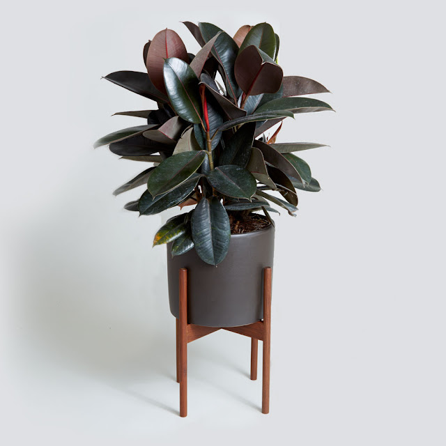 6 Of The Best Plants To Buy For Your Home Julie Lodhy