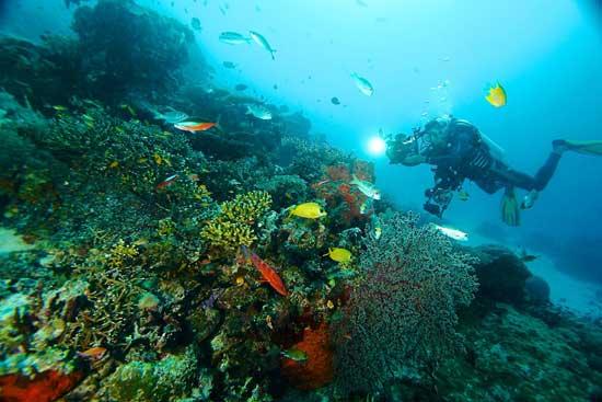 http://www.kembar.pro/2015/12/wonderful-wisata-pantai-gambar-kepulauan-raja-ampat-papua.html