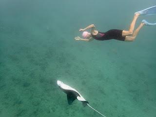 http://www.tropicallight.com/swim1/28oct18manta/28oct18manta.html