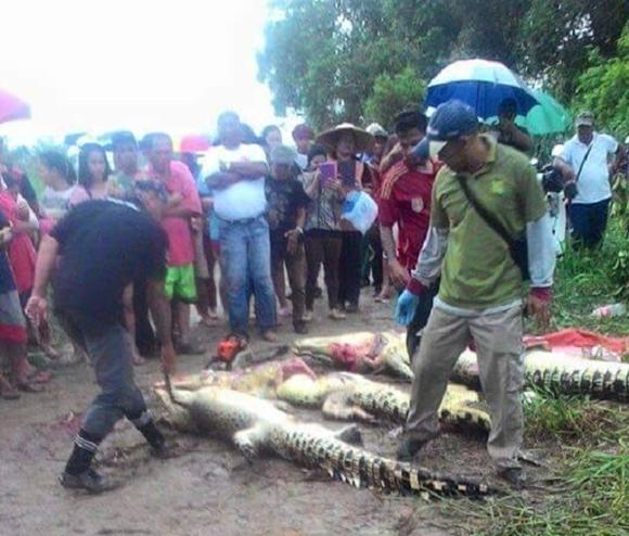 Penduduk Belah Perut Buaya Baham Nelayan Di Sungai Nakat Bakong Miri