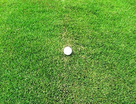 Jual Rumput Golf   Suplier Rumput Golf   Tukang Rumput Taman   Aneka Macam Rumput Manila