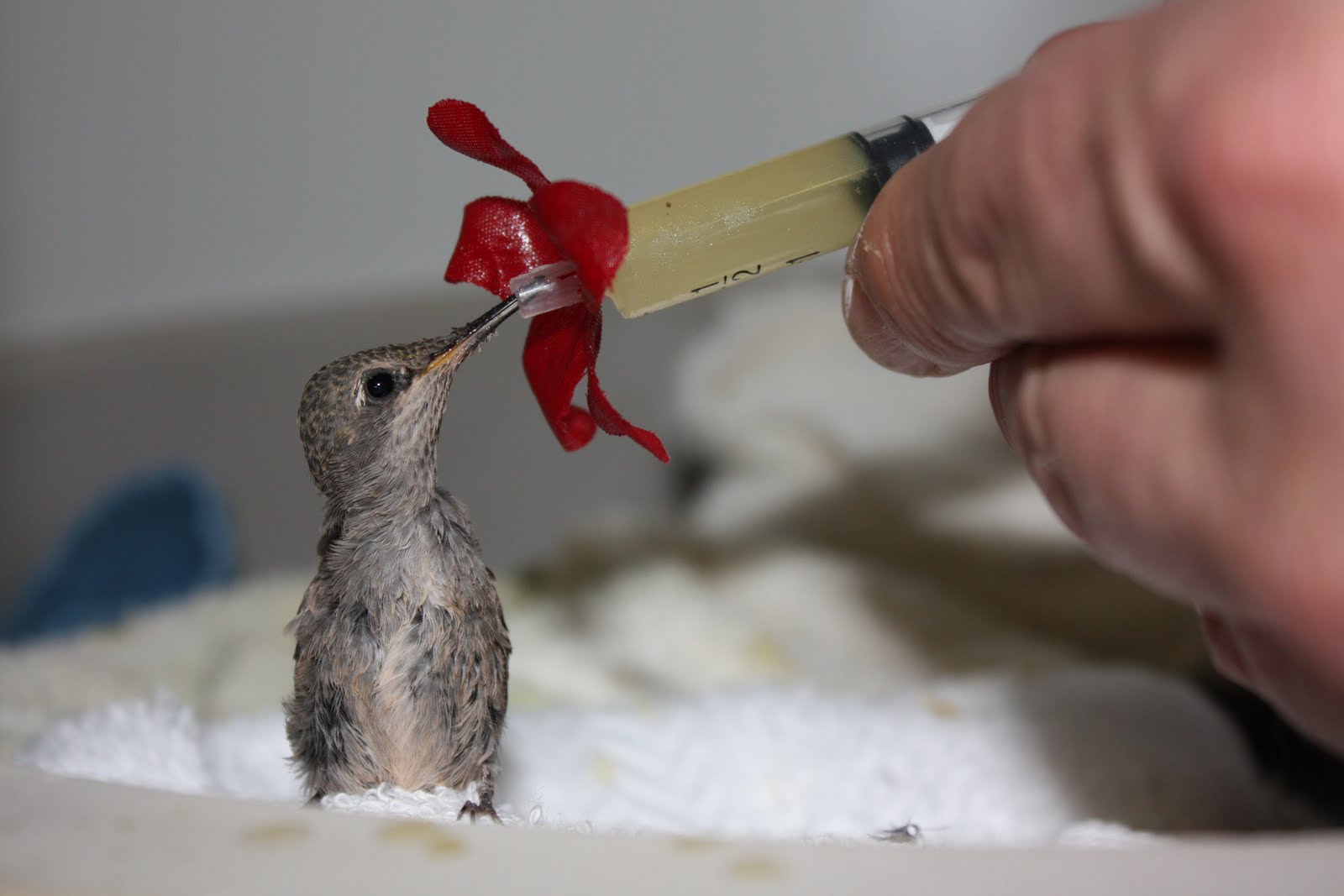 Baby Hummingbird | Itsy Bitsy Small Stuff | Pinterest ...