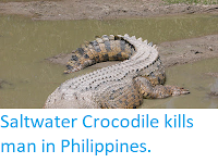 http://sciencythoughts.blogspot.com/2018/02/saltwater-crocodile-kills-man-in.html