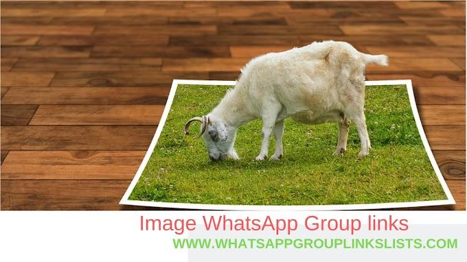 Join Image WhatsApp Group Links List