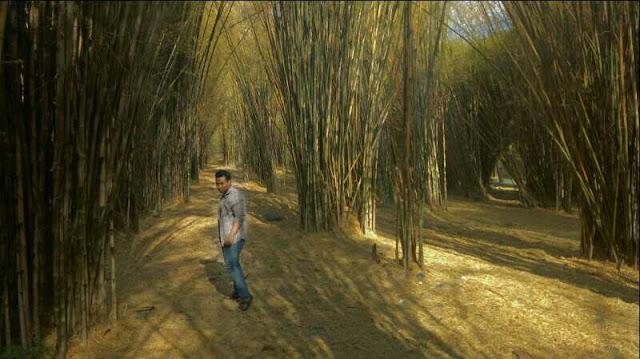 Pilihan tenpat wisata di surabaya, hutan bambu keputih