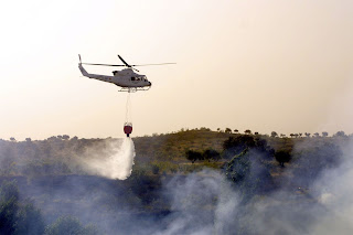 Claves para evitar incendios forestales - Fénix Directo Blog