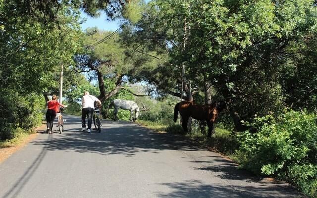 Ada'da-bisiklet-turu
