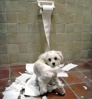 perro maltes liado con el papel del servicio
