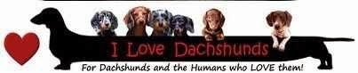 DACHSHUNDS ARE MY LOVE