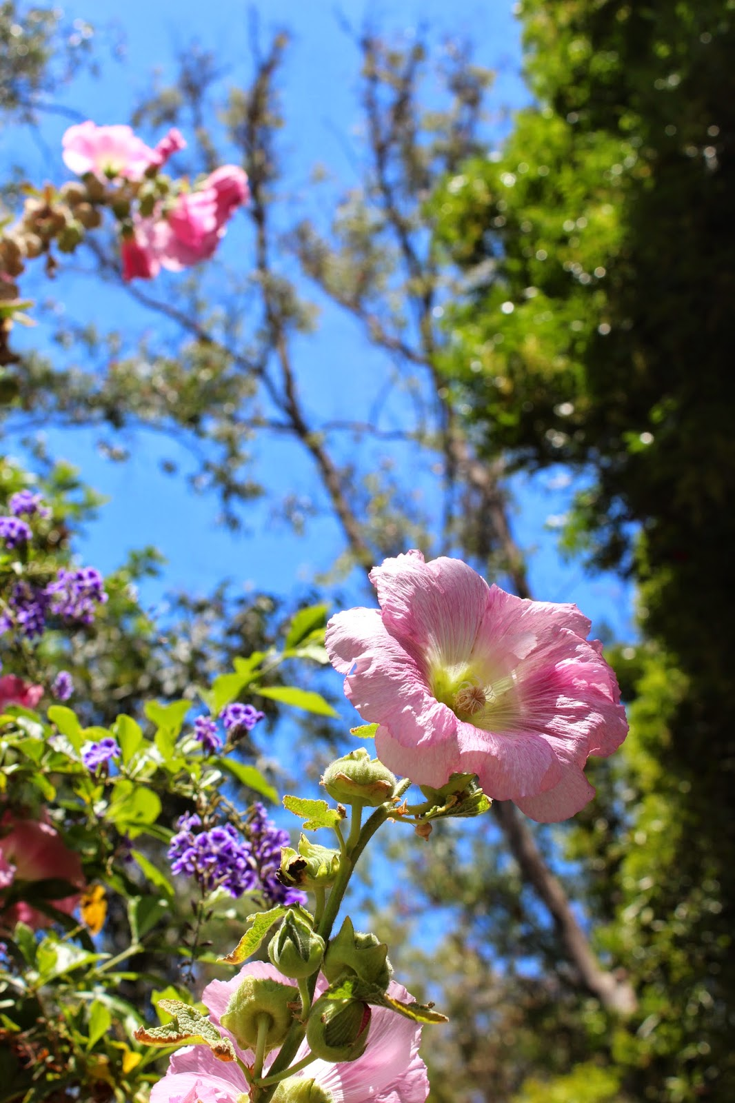 milkweed and a monarch pollinator habitat native plants usda hardiness zone