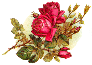 rose flower botanical art image