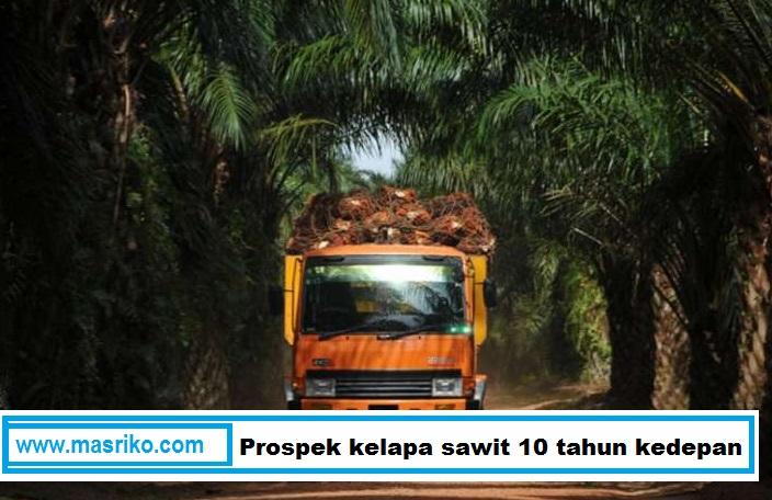 perkebunan kelapa sawit, minyak kelapa sawit, kelapa sawit, sawit, Prospek kelapa sawit 10 tahun kedepan