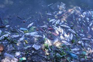 Tài nguyên nước bị nhiễm bẩn