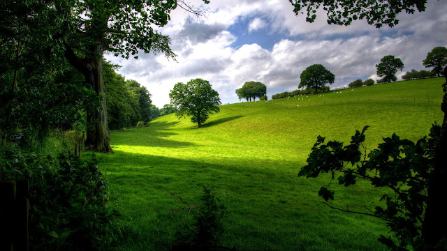 Foto met groene heuvels met wat bomen