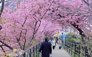 LINE Hadirkan Bunga Sakura Berguguran Di Room Chat!
