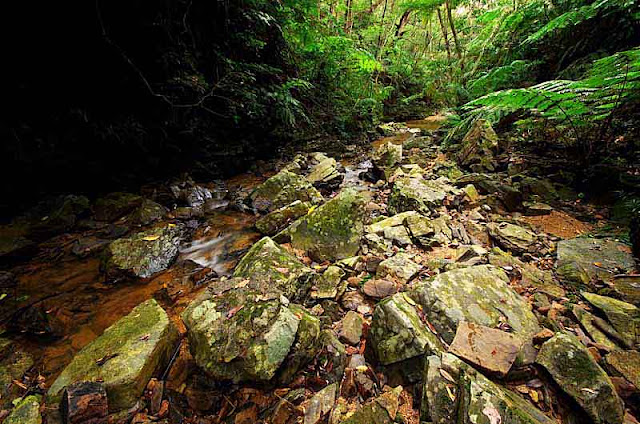 wide angle view,rocks and jungle,stream leading to waterfall